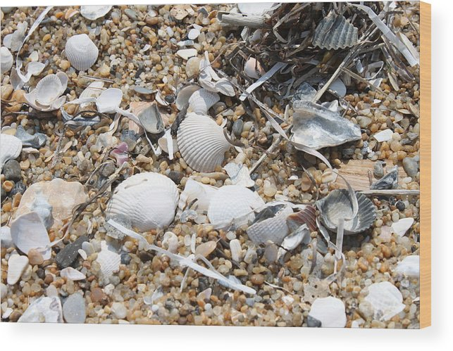 Beach Wood Print featuring the photograph Sea Ribbons And Shells by Marcie Daniels
