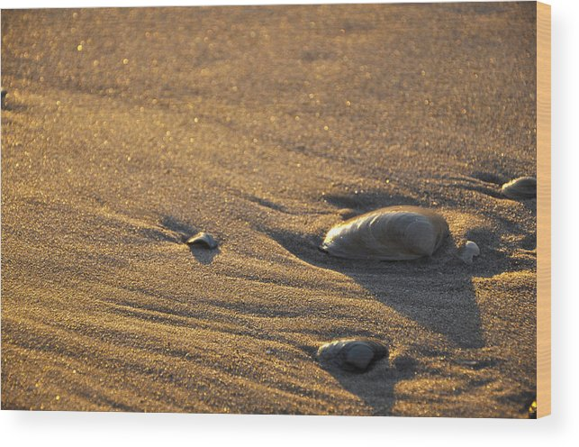 Sea Shells Wood Print featuring the photograph Sea Shells by Denise Laurin