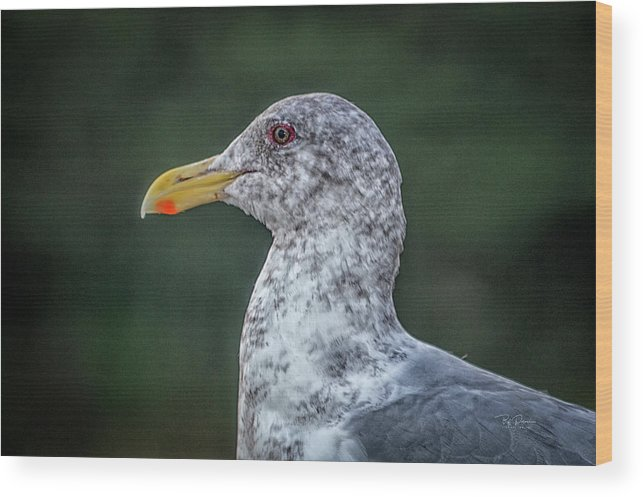 Seagull Wood Print featuring the photograph Seagull Head Shot by Bill Posner