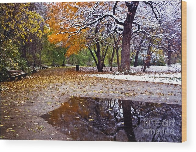 Park Wood Print featuring the photograph Seasons Changing by Sven Brogren