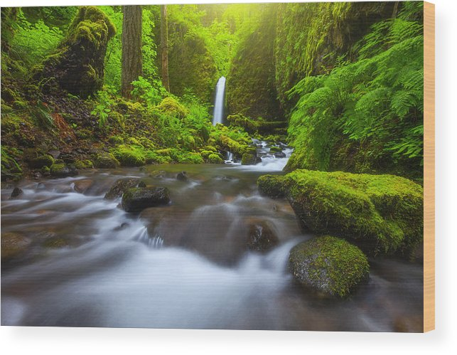 Oregon Wood Print featuring the photograph Seclusion by Darren White