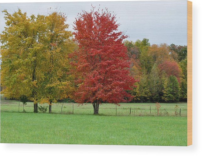 Landscapes Wood Print featuring the photograph Seeing Red by Jan Amiss Photography