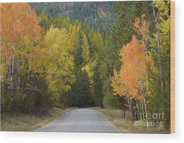 Trees Wood Print featuring the photograph Selkirk Color by Idaho Scenic Images Linda Lantzy