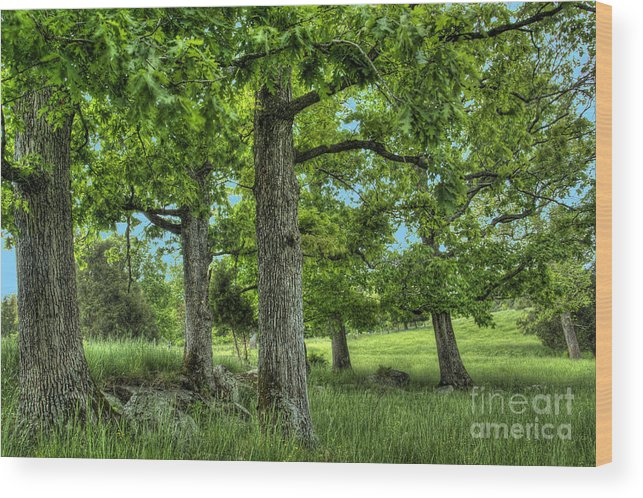 Peace Project Wood Print featuring the photograph Shade Trees by Pete Hellmann