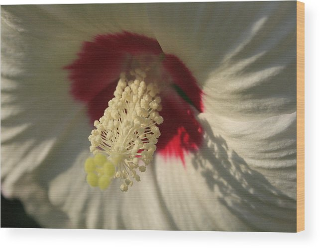 Flowers Wood Print featuring the photograph Shadow Lace by Alan Rutherford