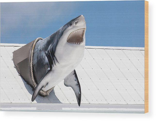 Key Largo Wood Print featuring the photograph Shark Attack by Art Block Collections