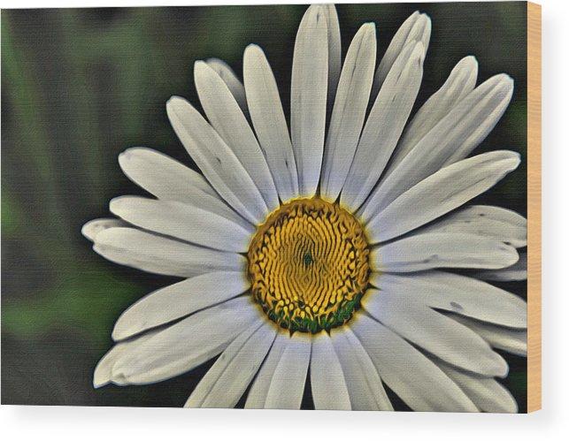 Shasta Daisy Wood Print featuring the painting Shasta Daisy by Modern Art