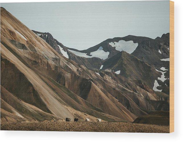 Sheep Wood Print featuring the photograph Sheep Caravan by Marina Weishaupt