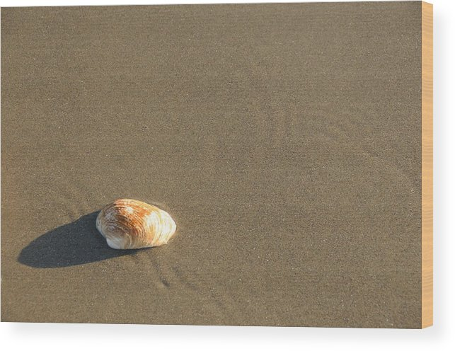 Beach Shell Sand Sea Ocean Wood Print featuring the photograph Shell And Waves Part 1 by Alasdair Turner