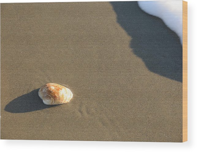 Beach Shell Sand Sea Ocean Wood Print featuring the photograph Shell And Waves Part 2 by Alasdair Turner