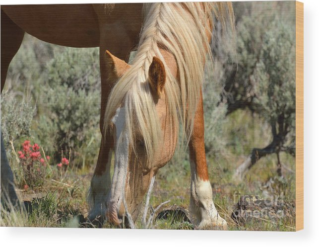Horse Wood Print featuring the photograph Shiloh by Out West Originals