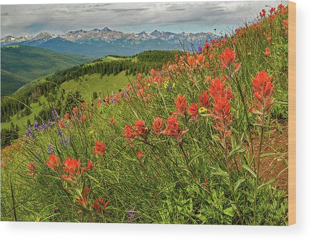 Wildflowers Wood Print featuring the photograph Shrine Pass Wildflowers by Jim Bennett