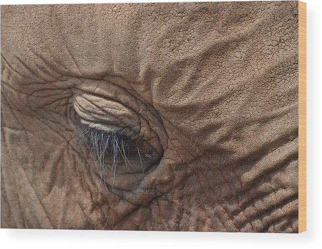 Animal Wood Print featuring the photograph Shy One by Joe Burns