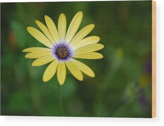 Flower Wood Print featuring the photograph Simple Flower by Jennifer Englehardt