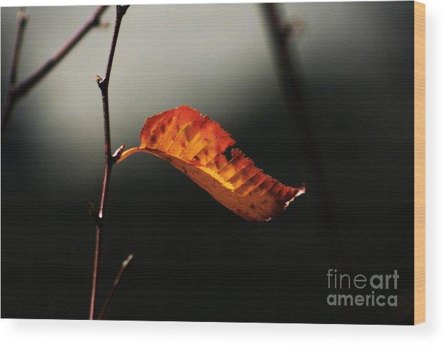 Fall Season Wood Print featuring the photograph Single Fall Color Leaf by Robin Lynne Schwind