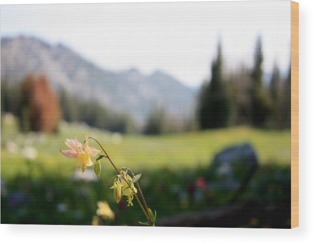 Flowers Wood Print featuring the photograph Single Mountain Flower by Joseph Peterson