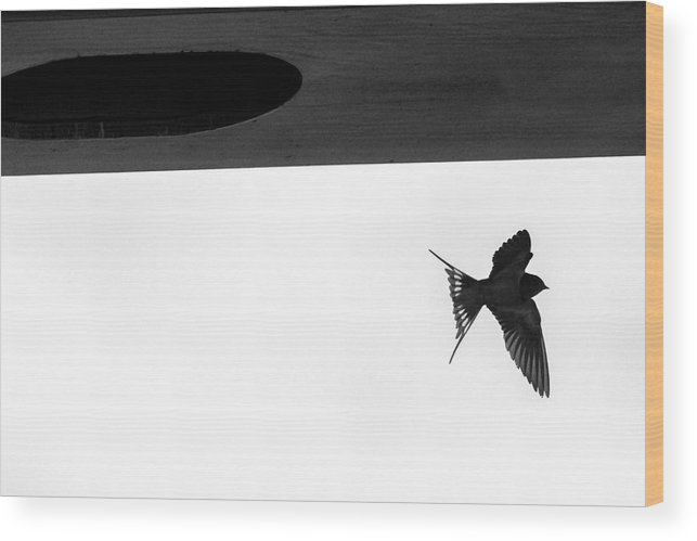 Barn Swallow Wood Print featuring the photograph Single Swallow Flying Under Bridge by Dan Friend