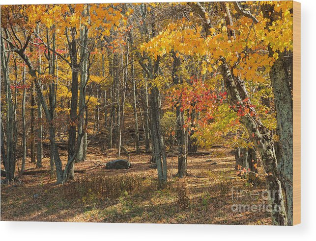 Road Wood Print featuring the photograph Skyline Drive At Naked Creek Overlook In Shenandoah National Park by Louise Heusinkveld