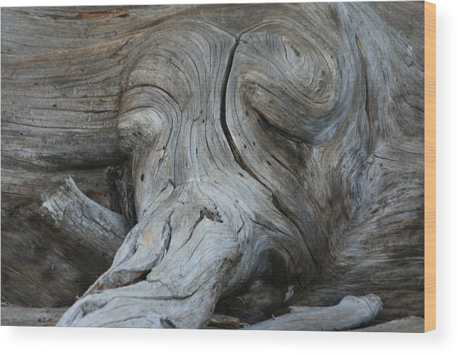 Wood Wood Print featuring the photograph Sleeping Elephant by Lauren Marems