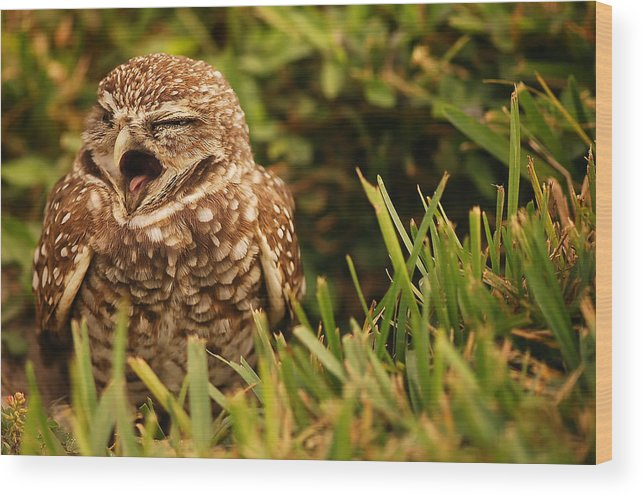Sleepy Wood Print featuring the photograph Sleepy Owl by Mandy Wiltse
