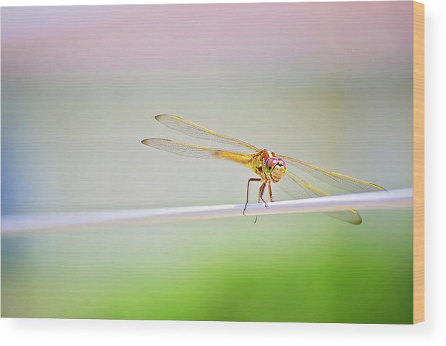 Dragonfly Wood Print featuring the photograph Smiling Dragonfly by Micah Williams