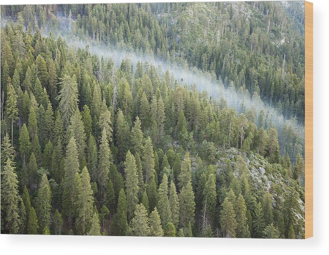 Sequoia National Park Wood Print featuring the photograph Smoke In Forest by Rick Pham