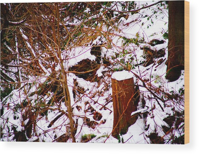 Winter Wood Print featuring the photograph Snow And Tree Trunk by Paul Kloschinsky