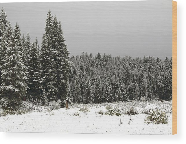 Snow Wood Print featuring the photograph Snow Trees by Michael Riley
