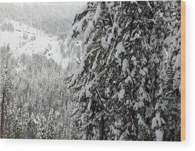 Snow Wood Print featuring the photograph Snow, Trees, Yellowstone by Michael Riley
