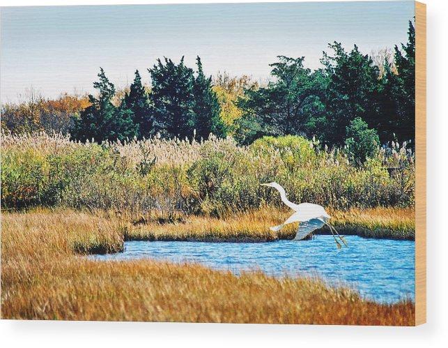 Landscape Wood Print featuring the photograph Snowy Egret-island Beach State Park N.j. by Steve Karol