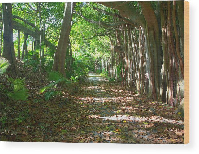 Bermuda Wood Print featuring the photograph Southlands by Lori Goodwin