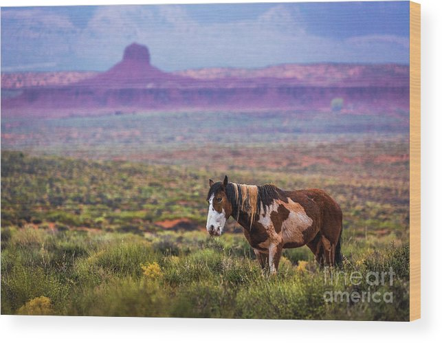 Southwest Wood Print featuring the photograph Paint Horse by Anthony Michael Bonafede