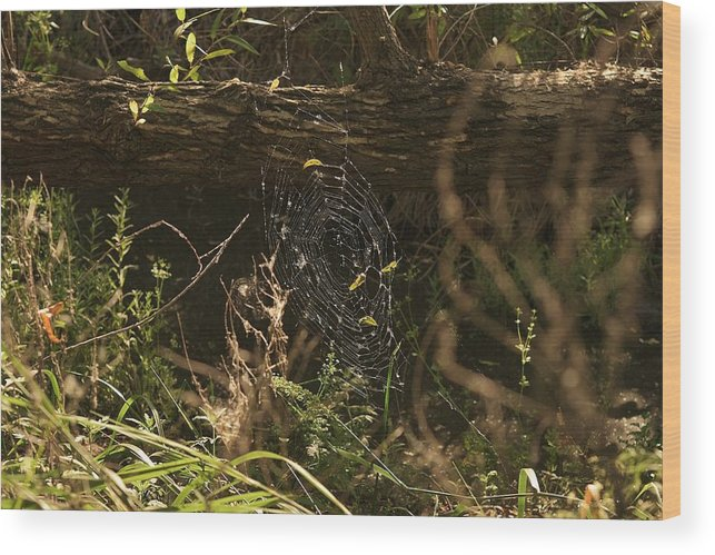Linda Brody Wood Print featuring the photograph Spiders Web In Sunlight In Peters Canyon by Linda Brody