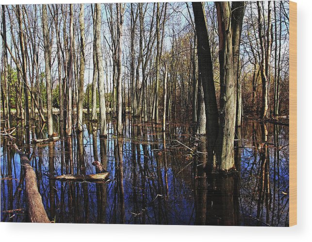 Guelph Wood Print featuring the photograph Spring At The Pond by Debbie Oppermann