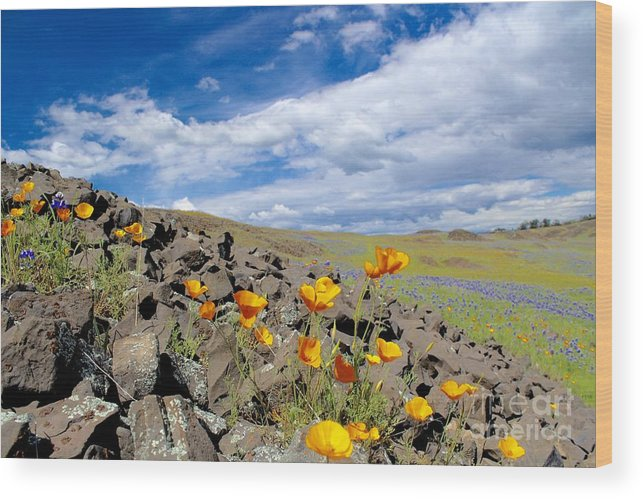 Flowers Wood Print featuring the photograph Spring Flowers by Irina Hays