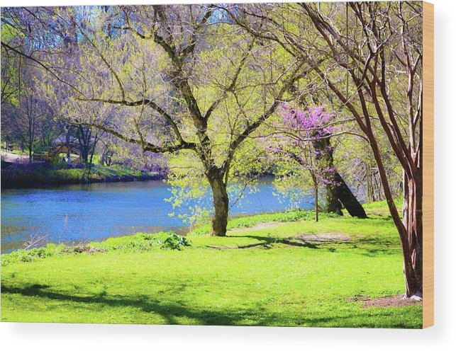 Spring Wood Print featuring the photograph Spring In Bloom by Susan Derrickson Hanna