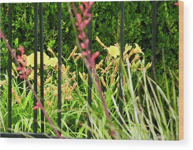 Flowers Wood Print featuring the photograph Spring Jumble by Suzette Munson