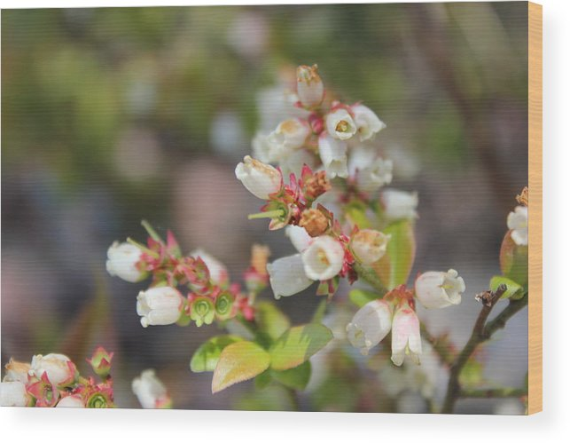 Pure Wood Print featuring the photograph Spring Wildflower by Two Bridges North