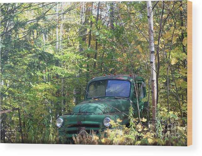 Wood Print featuring the photograph Springtime In The Woods Of Maine by Barbara Milhender