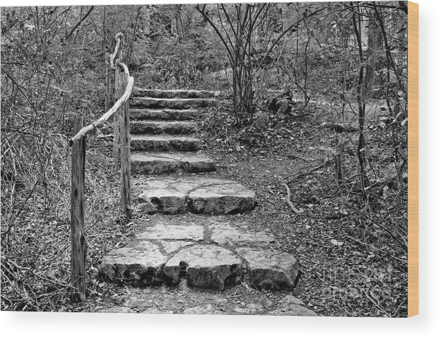 Nature Wood Print featuring the photograph Stairway To Nature by Gary Richards
