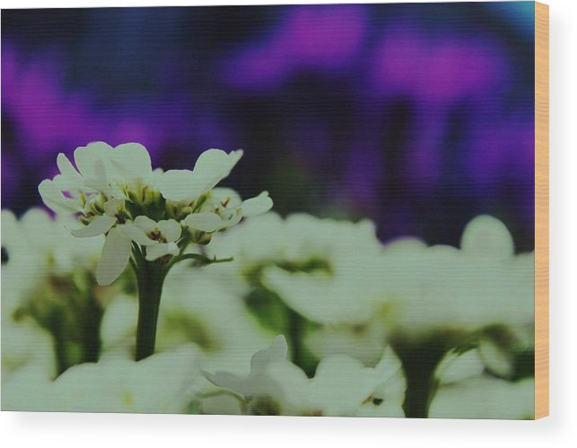 Flower Wood Print featuring the digital art Stand by Amy Neal