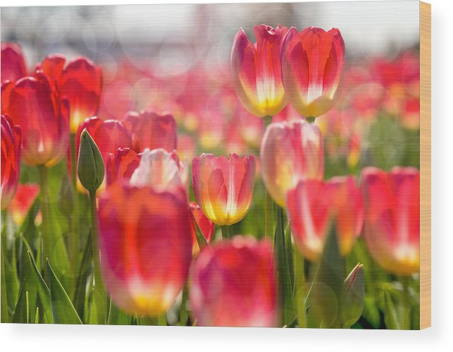 Wooden Shoe Wood Print featuring the photograph Standing Out In The Crowd by David Gn