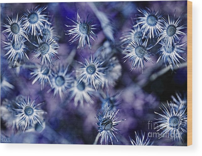 Wild Wood Print featuring the photograph Star Flowers by Athanasios Athanasiou