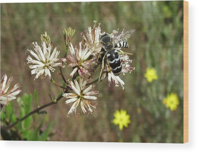 Nature Wood Print featuring the photograph Striped Bee by Peg urban