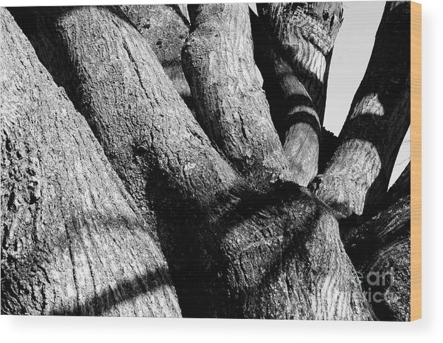 Tree Structure Wood Print featuring the photograph Structure by Steven Macanka