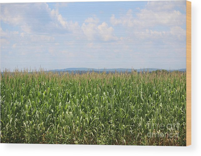 Corn Wood Print featuring the photograph Summer Corn And Blue Skies In Maine by Colleen Snow