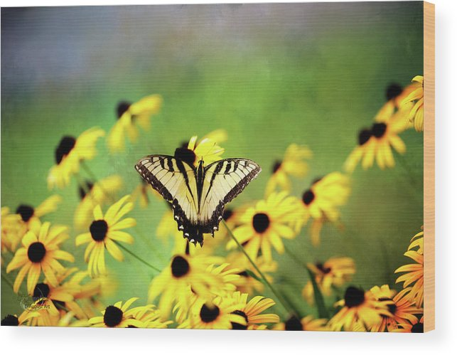Butterfly Wood Print featuring the photograph Summer Dream by Theresa Campbell