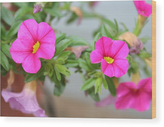 Flowers Wood Print featuring the photograph Summer Flowers by Linda Sannuti