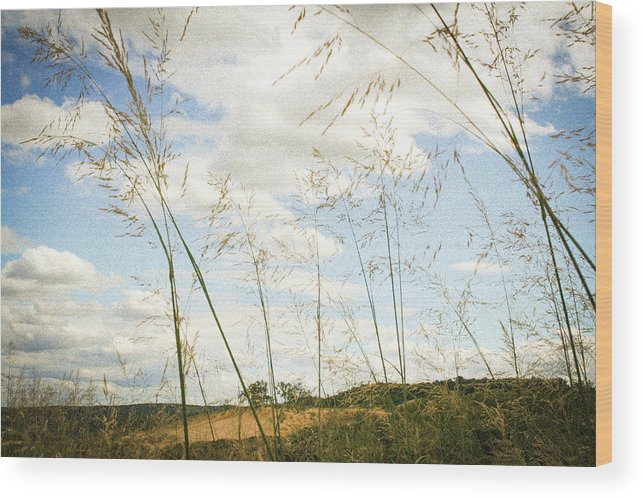 Summer Wood Print featuring the photograph Summer by Keith Kadwell