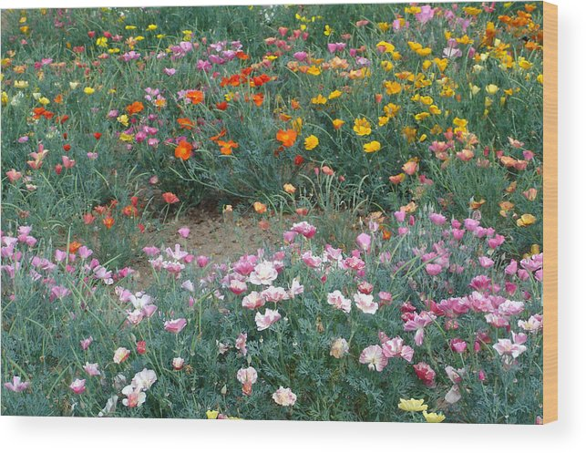 Flower Wood Print featuring the photograph Summer Poppy Meadow by Susan Baker